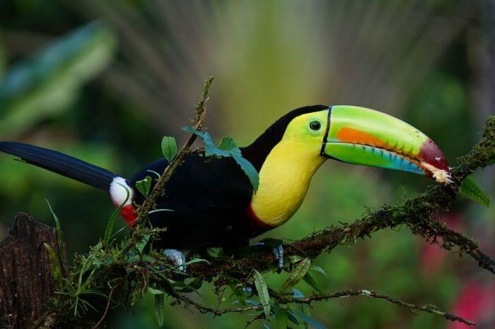 CAPODANNO IN COSTA RICA