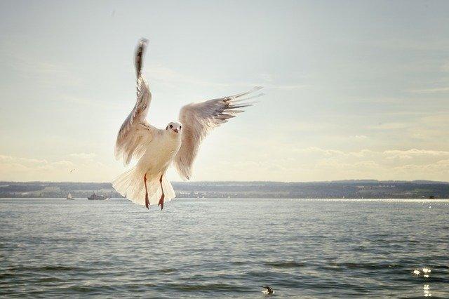 a partire dal 24 Ott – Birdwatching e Tour Ornitologici