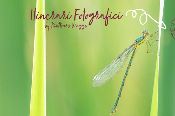 Itinerari Fotografici : a caccia di fiori ed insetti nell'entroterra ligure / 5-6 giugno